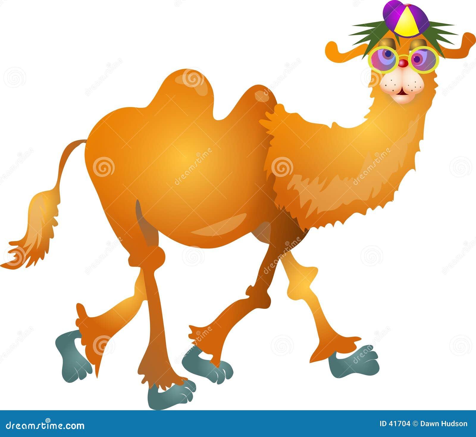 Kühles Kamel