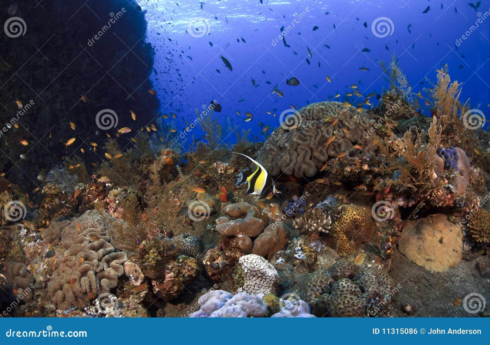 Künstliches Riff