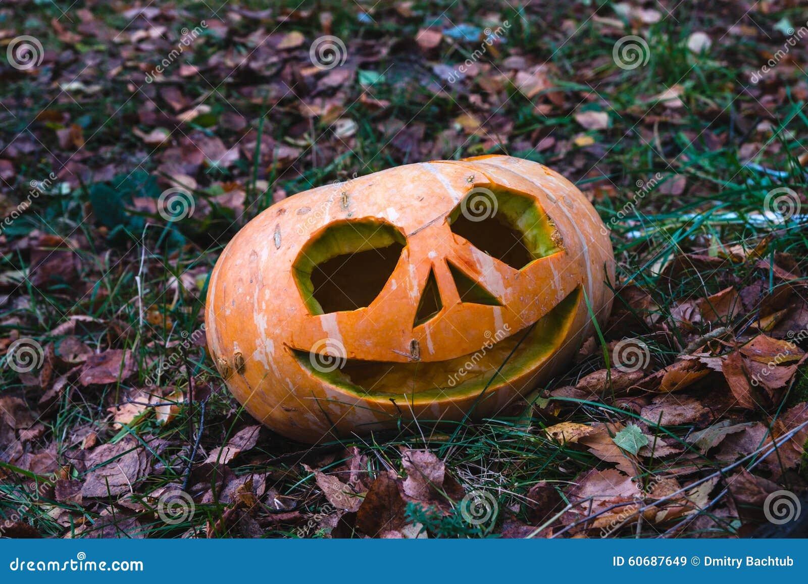 Kürbise für Halloween