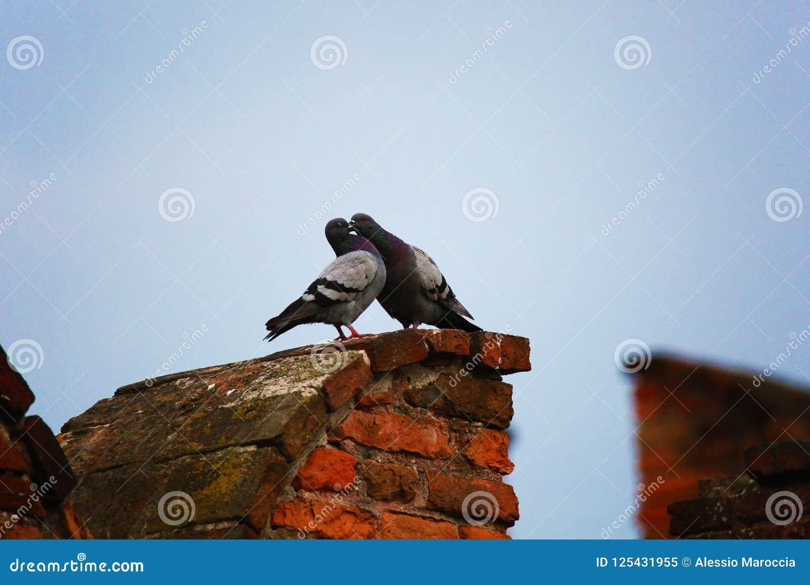 Küssen mit zwei Tauben