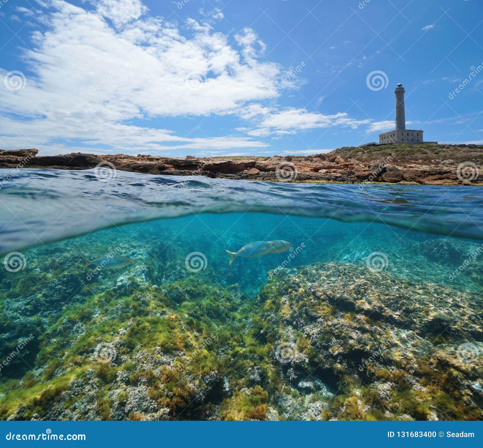 Küstenlinie mit einem Leuchtturm und einem felsigen Meeresgrund mit Fischen unter Wasser