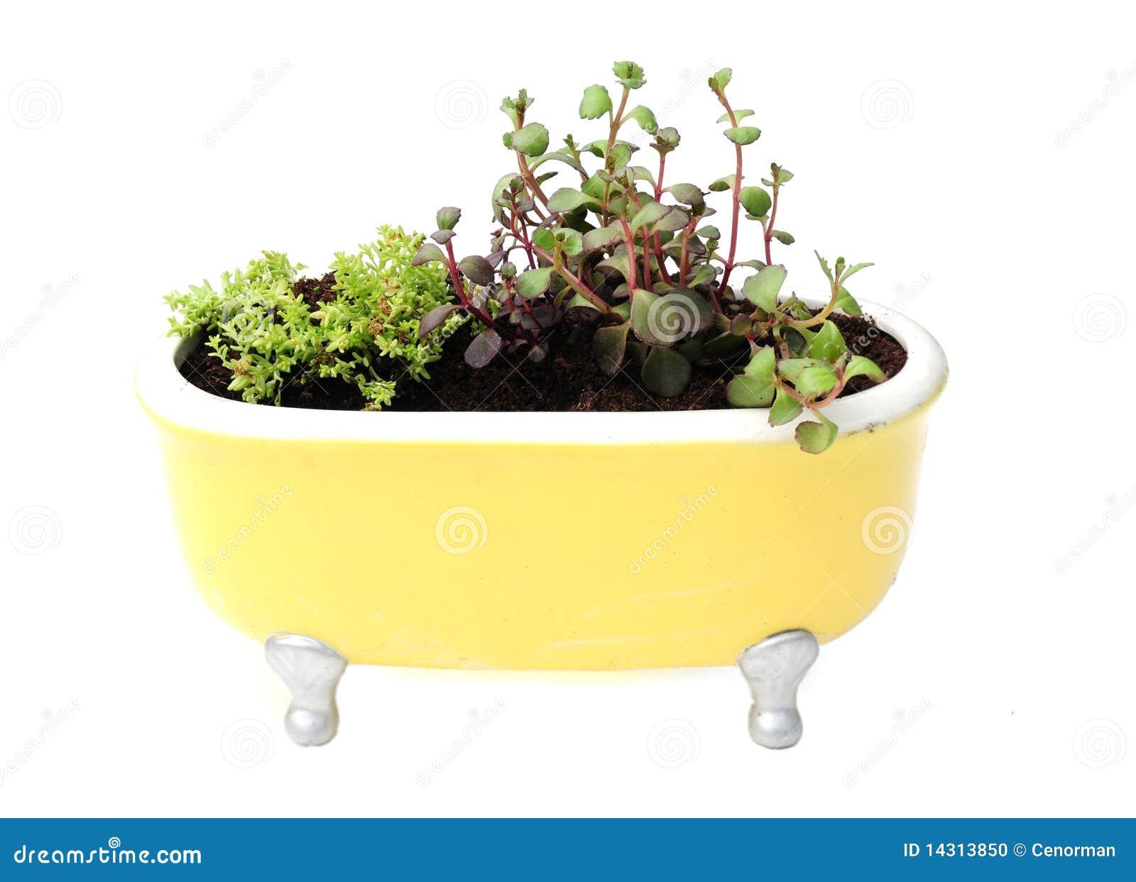 Kąpielowy plantatorski kolor żółty