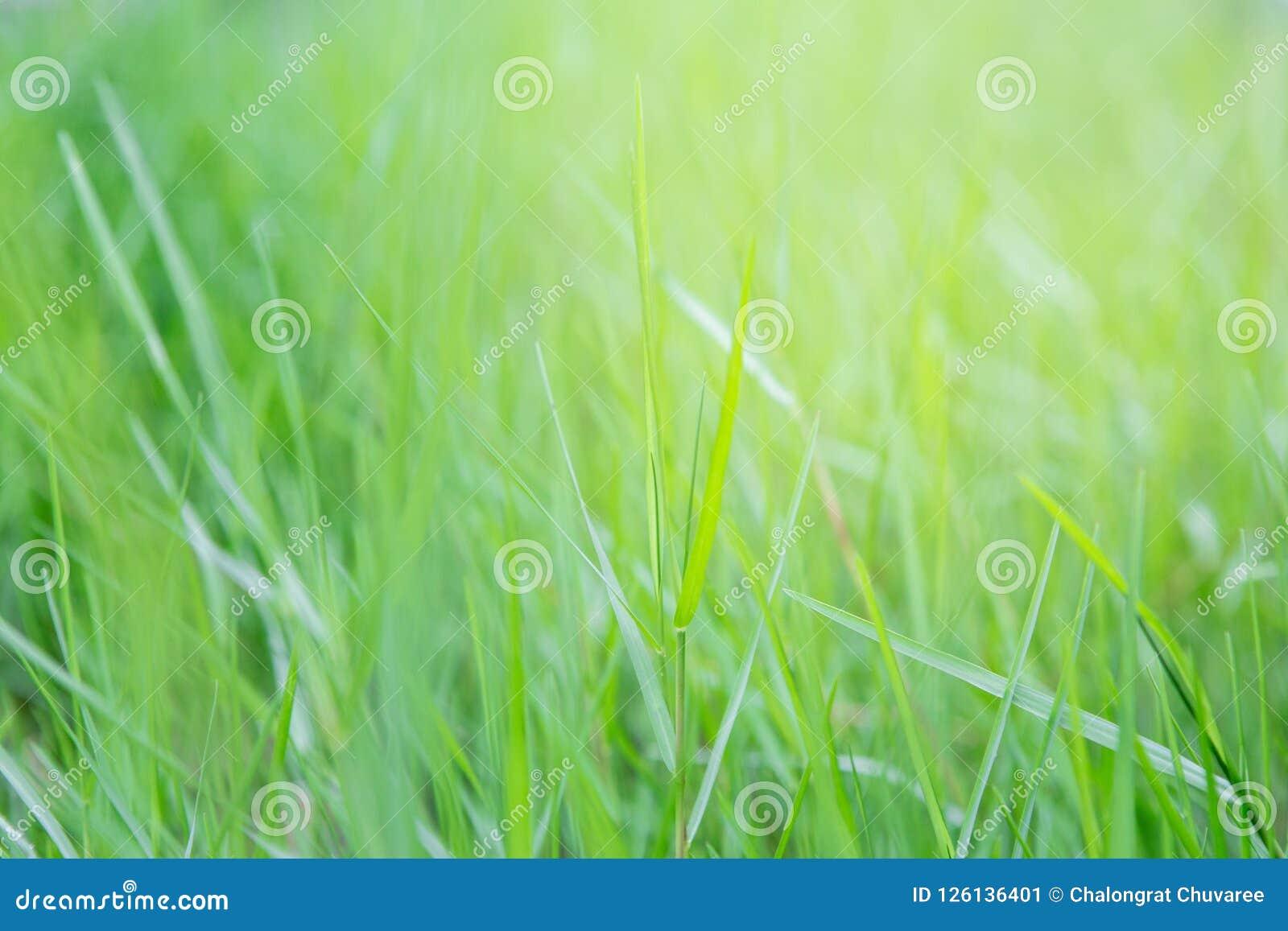 Kępa trawa