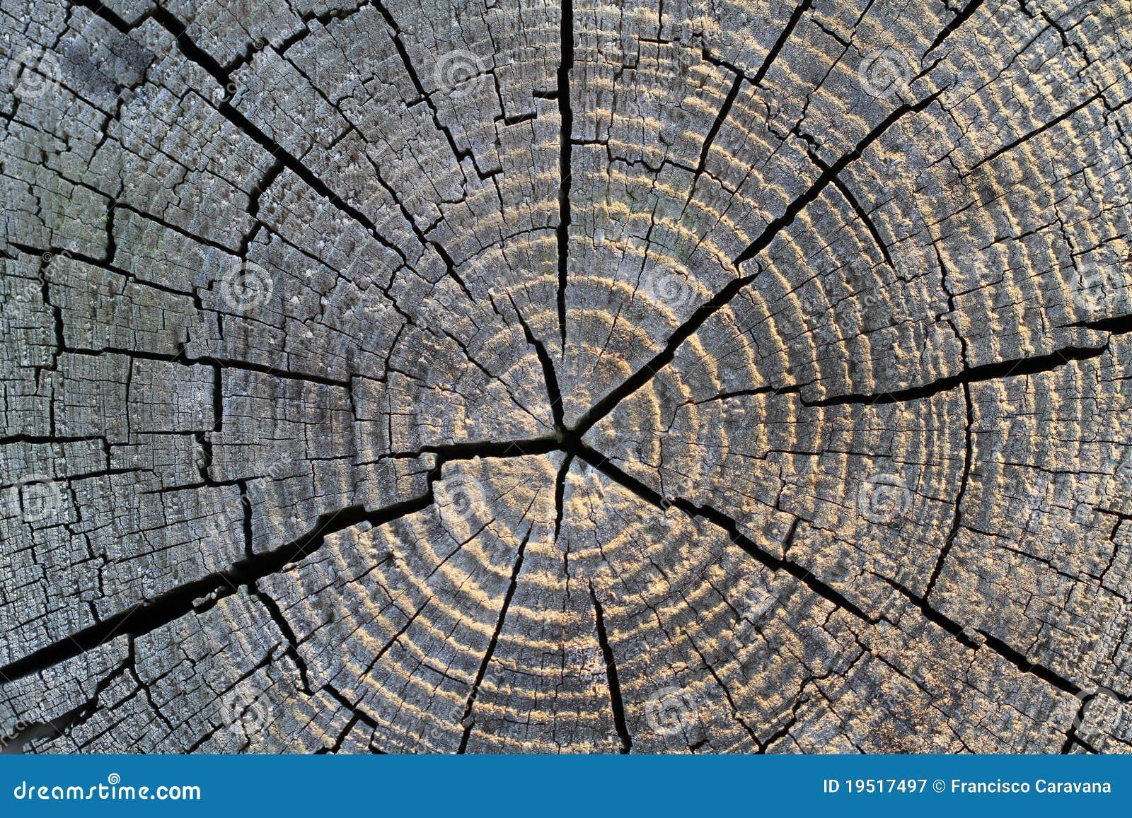 Kępki drewno