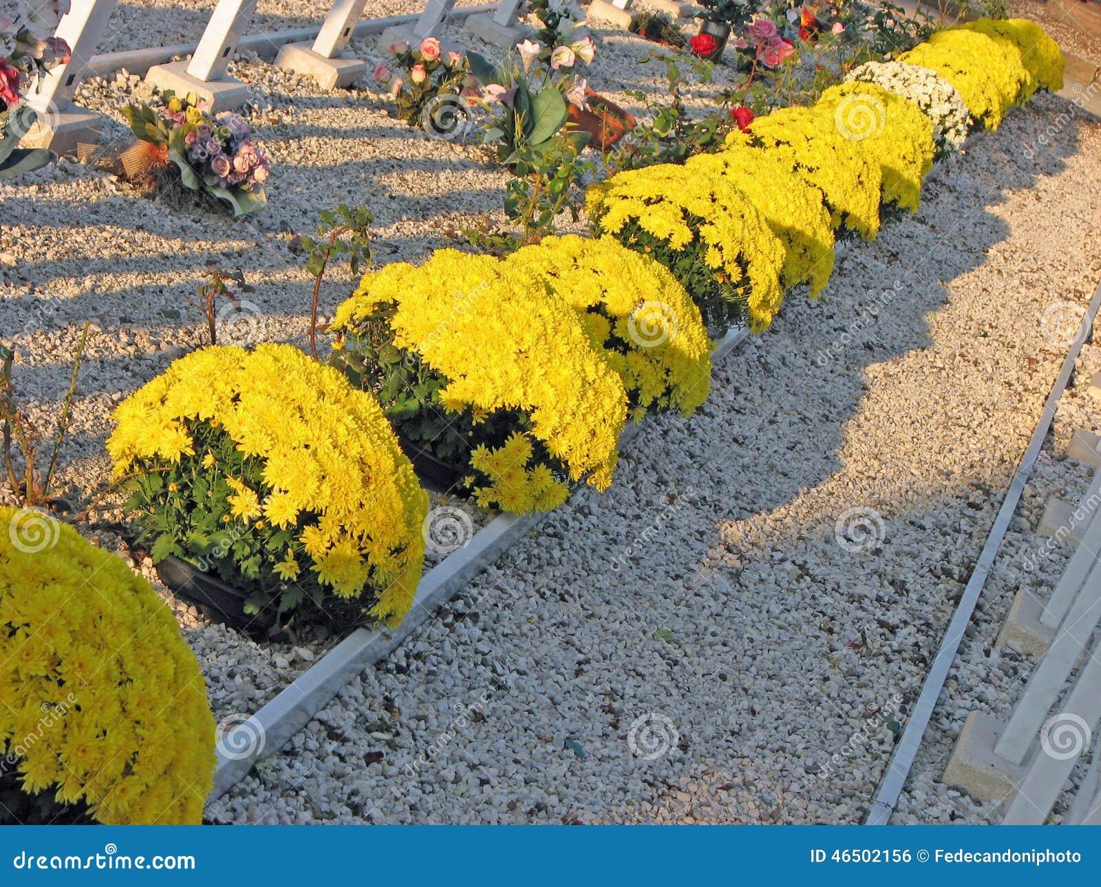 Kępy żółci kwiaty w cmentarnianych grób