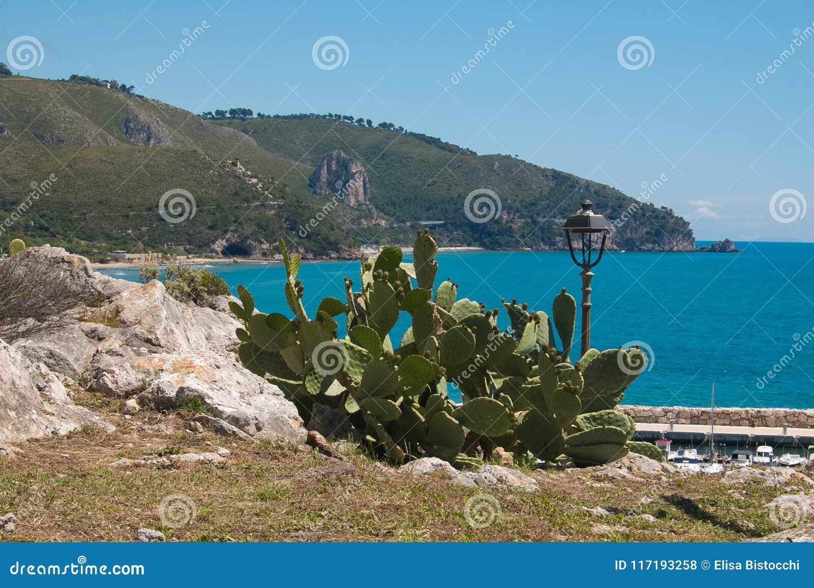 Kłującej bonkrety kaktus blisko morza Sperlonga, Lazio