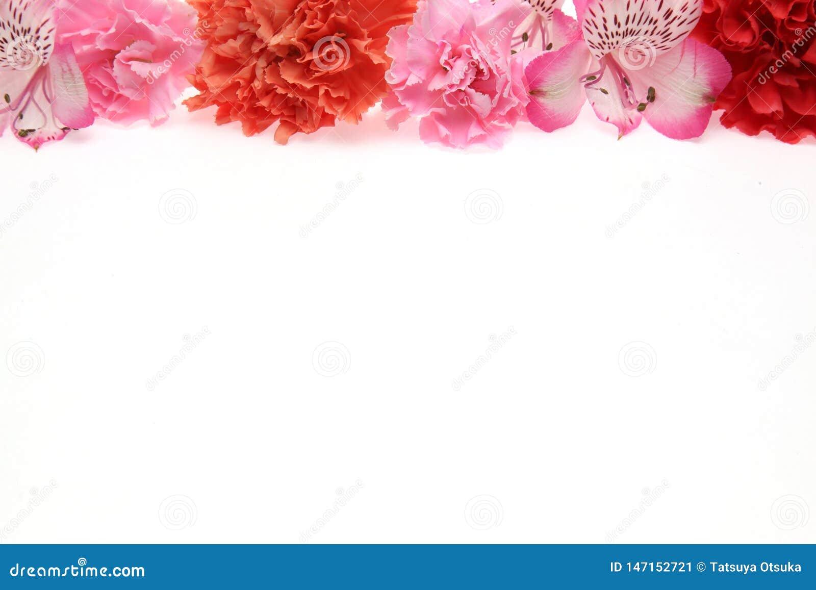 K?pfchen der Gartennelke und des Alstroemeria in einem wei?en Hintergrund