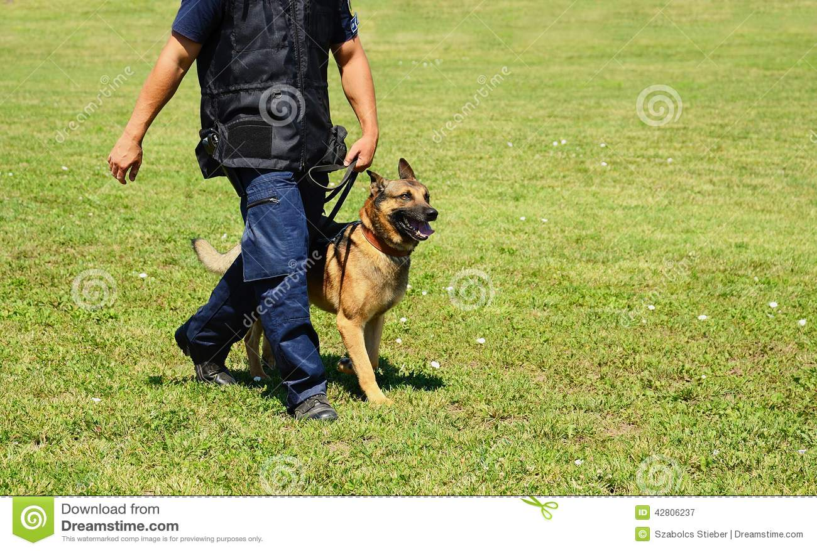 German Shepherd Police Dog Training Video Download