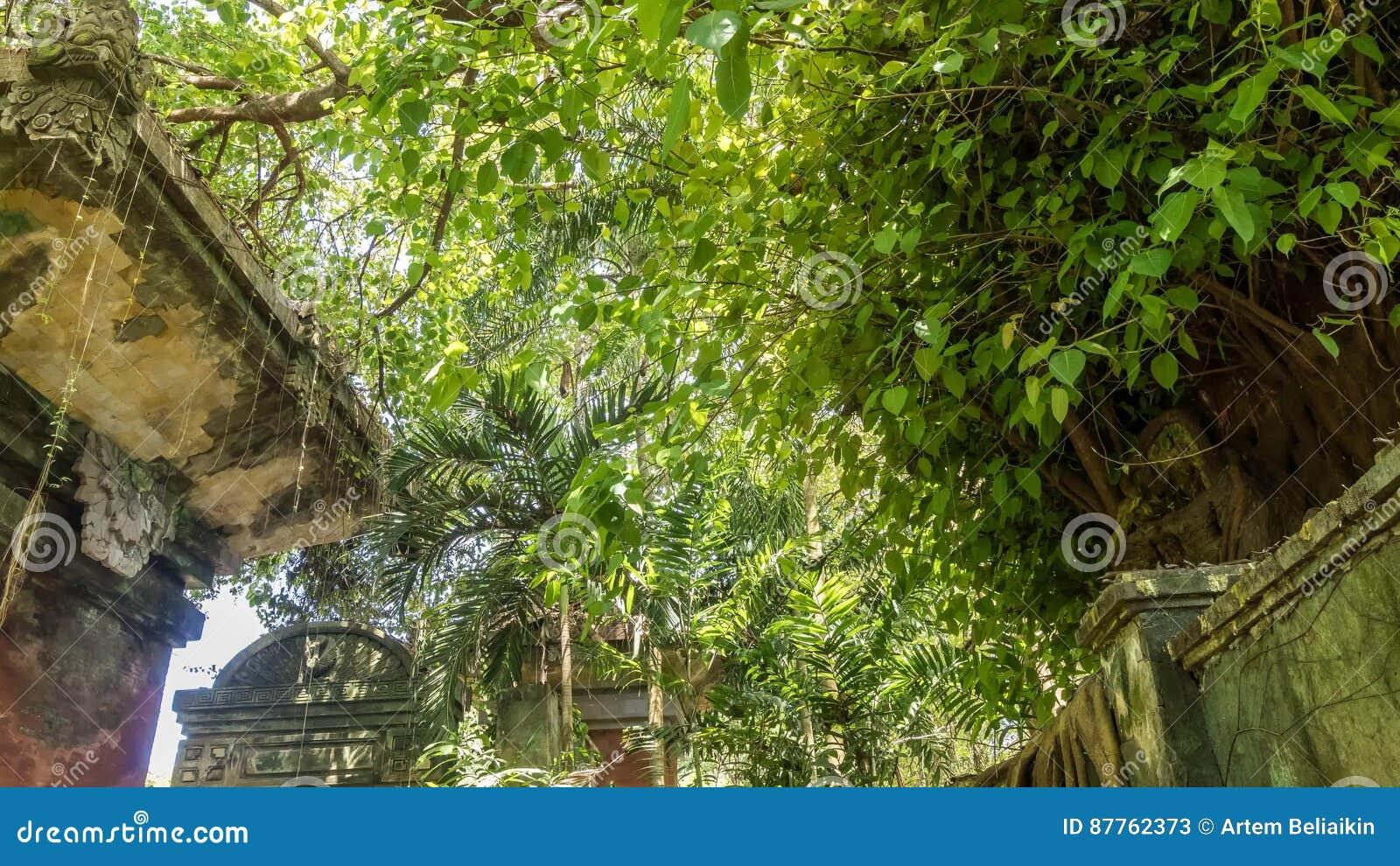 Spiksplinternieuw 4K Timelapse Van Tropisch Regenwoud Op Het Eiland Van Bali UZ-49