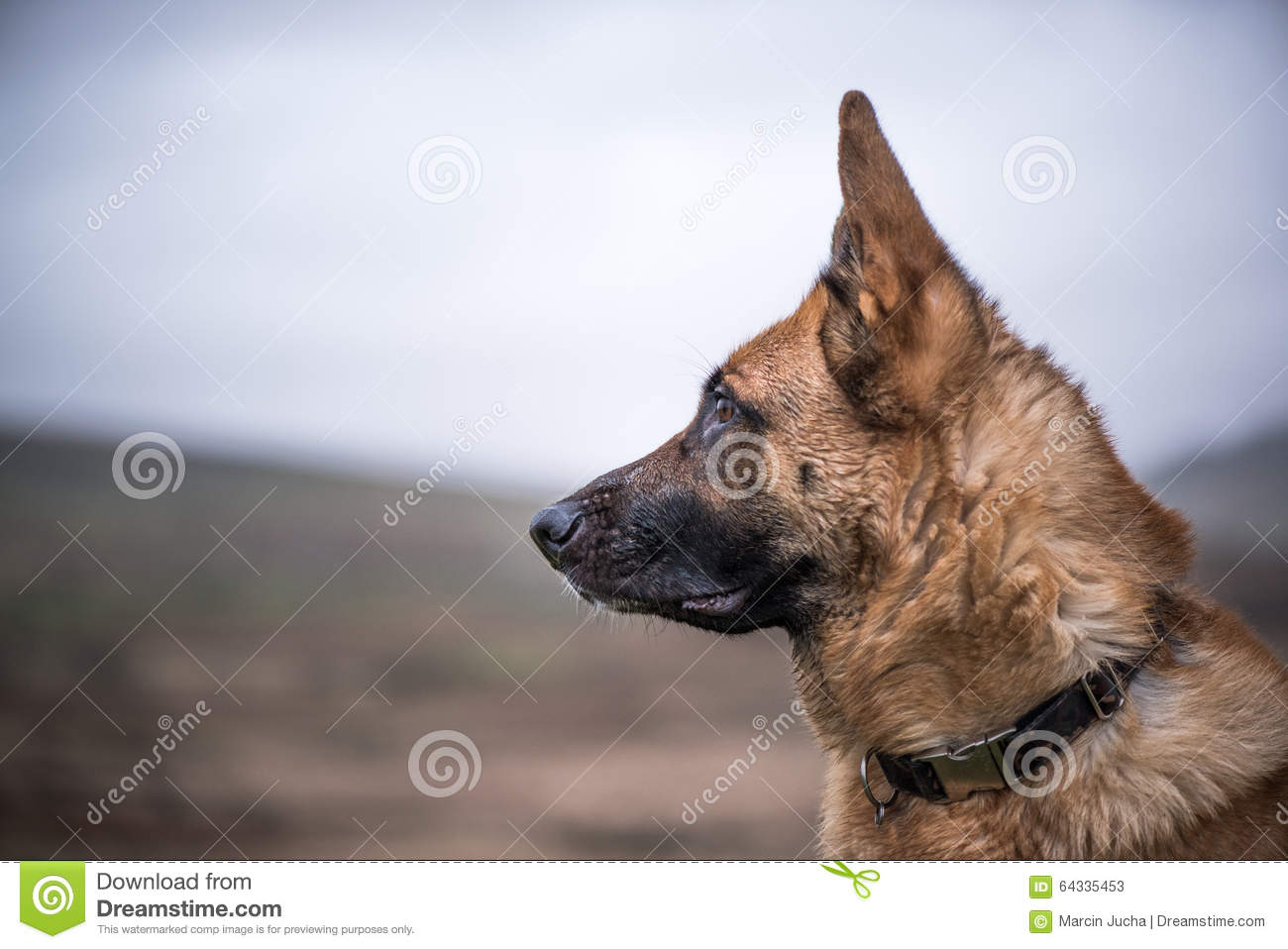 german shepherd training guide free download