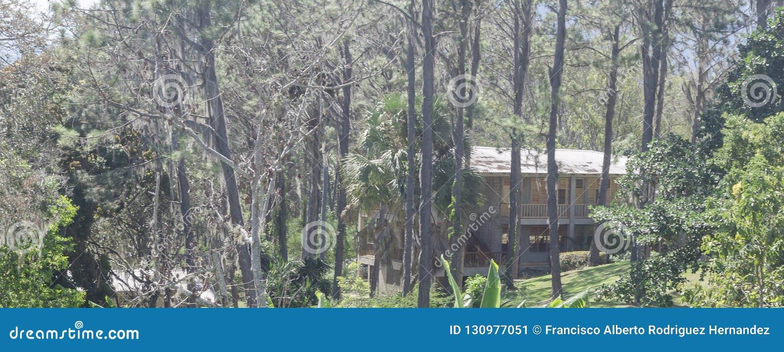 Kabin i bergen som omges av pinjeskogDominikanska republiken,
