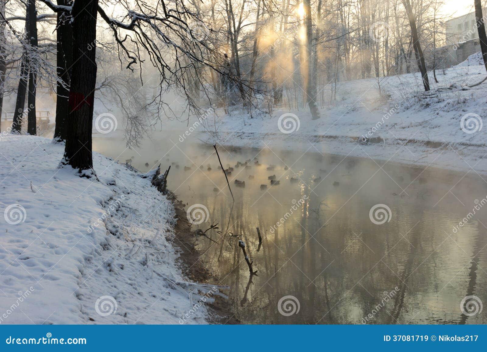Download Kaczki w zimie obraz stock. Obraz złożonej z park, stopa - 37081719