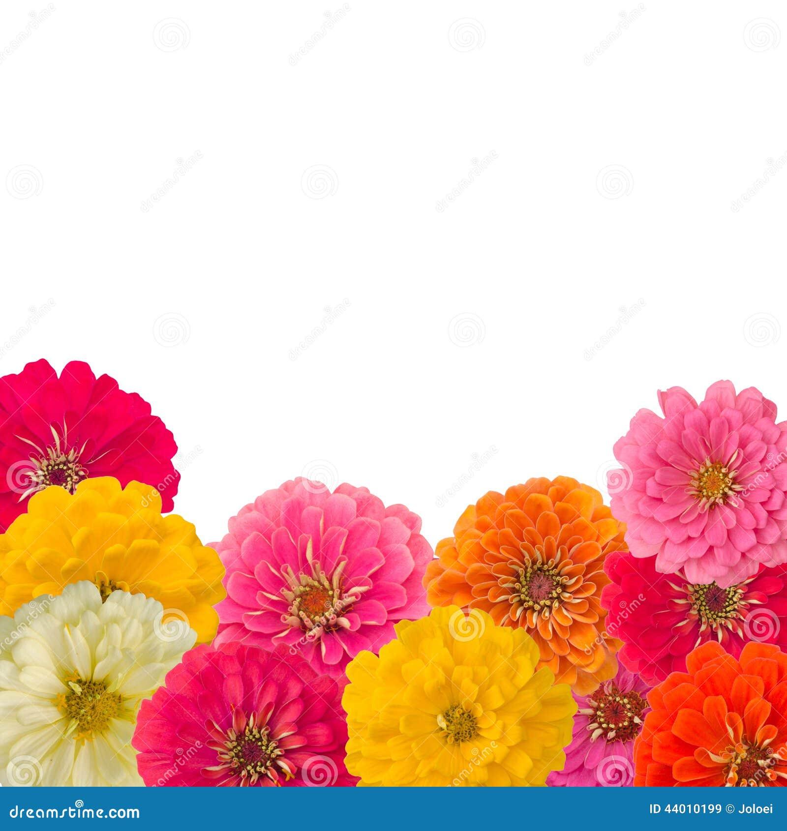 Kader van bloem Zinnias