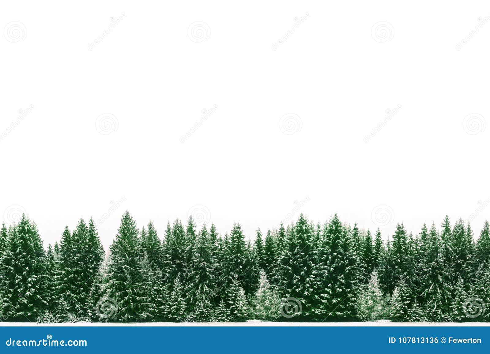 Kadergrens van het groene nette die bos van pijnboombomen door verse sneeuw tijdens de tijd van de Winterkerstmis wordt behandeld