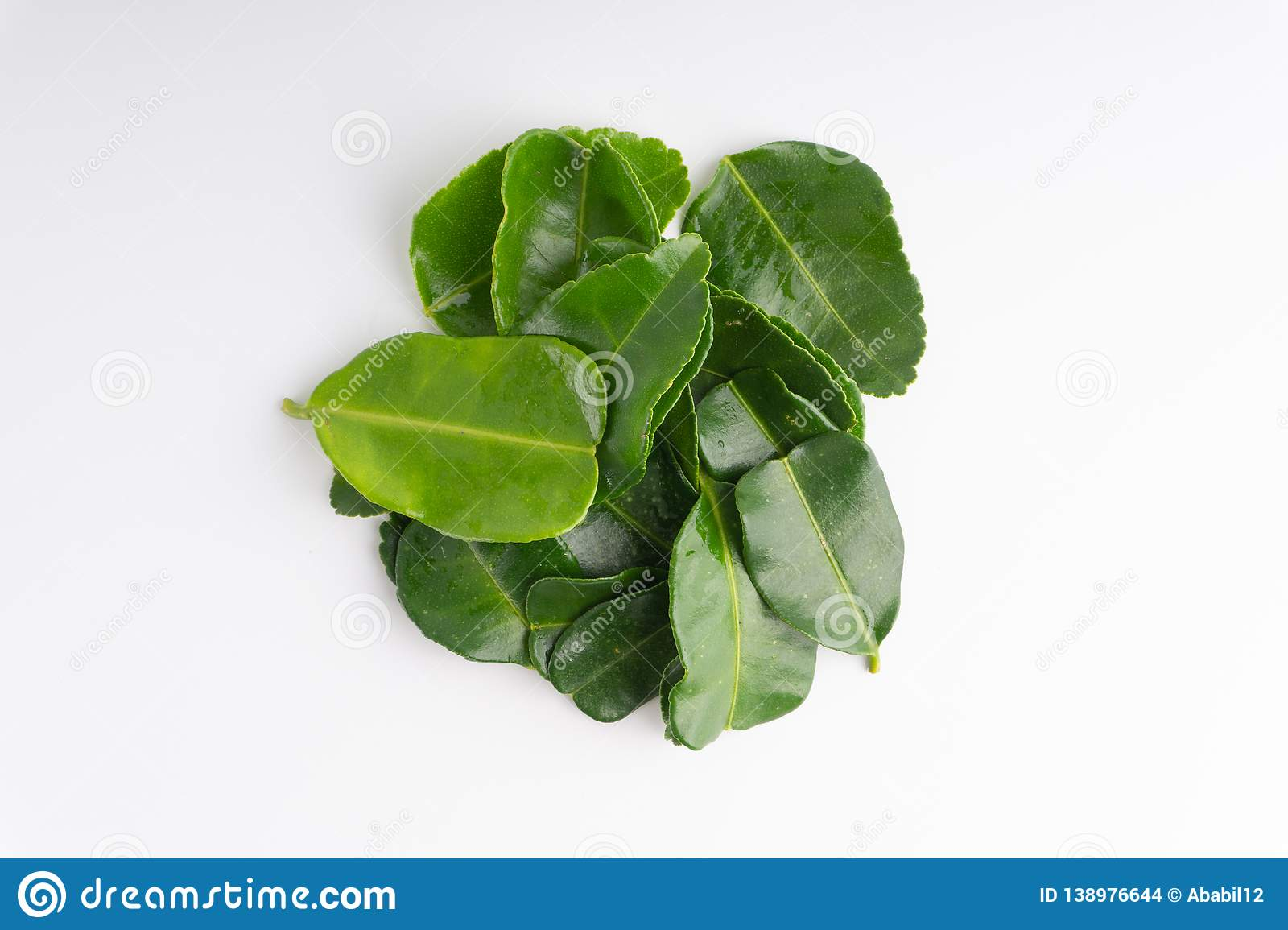 Kaffir lime leaf isolated on white background. Kaffir lime leaf Daun limau purut isolated on white background stock images