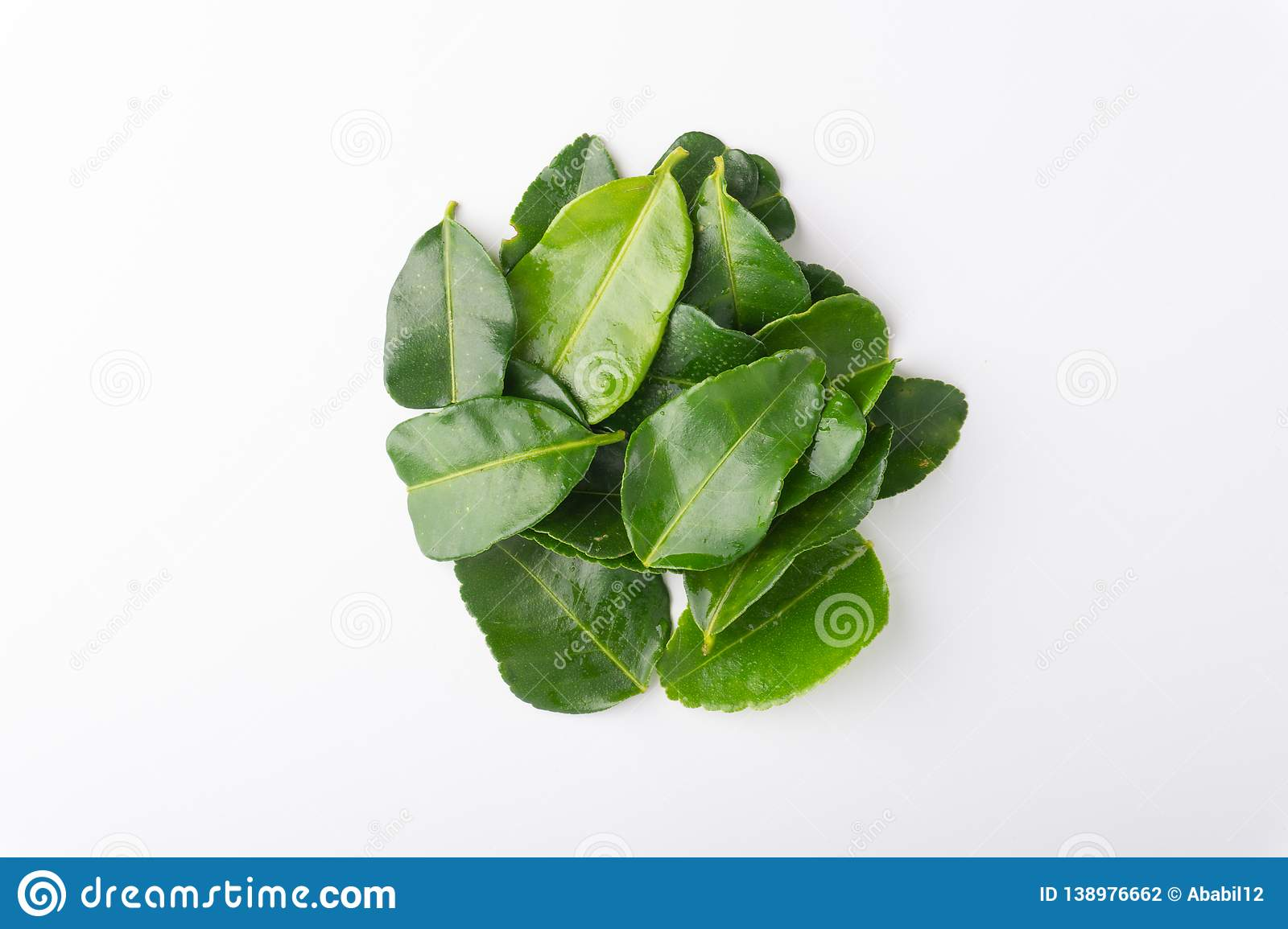 Kaffir lime leaf isolated on white background. Kaffir lime leaf Daun limau purut isolated on white background stock photography