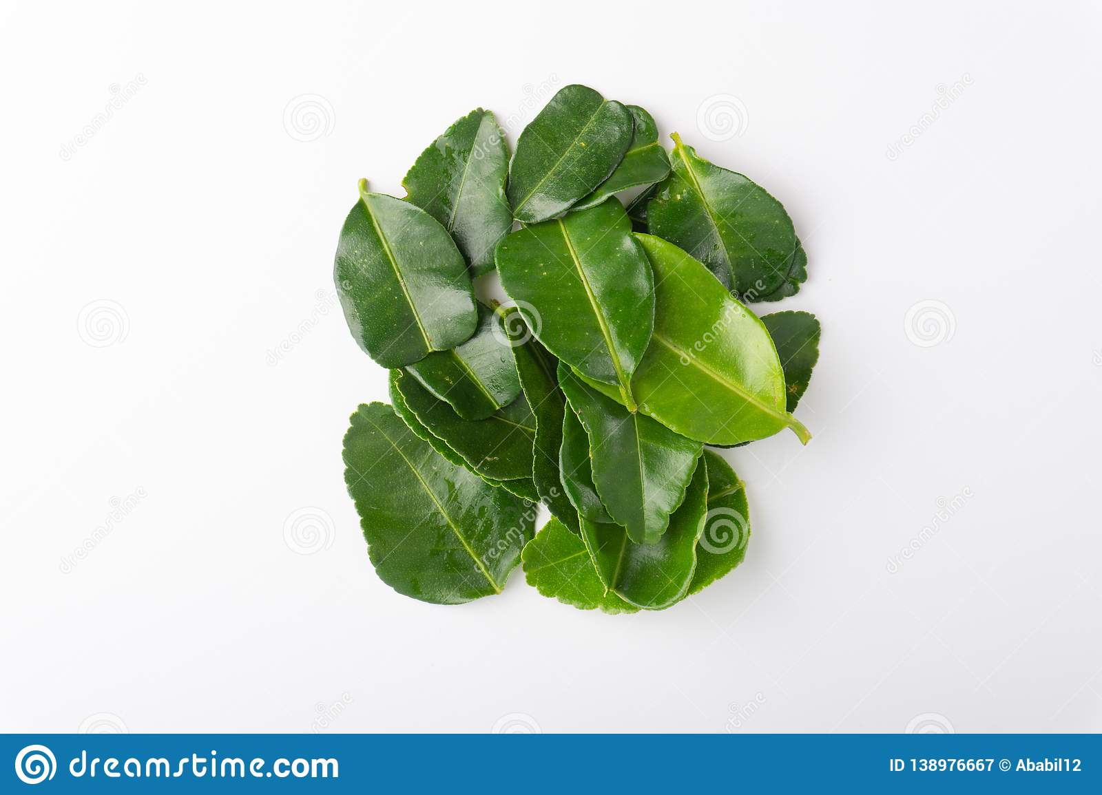 Kaffir lime leaf isolated on white background. Kaffir lime leaf Daun limau purut isolated on white background royalty free stock photography