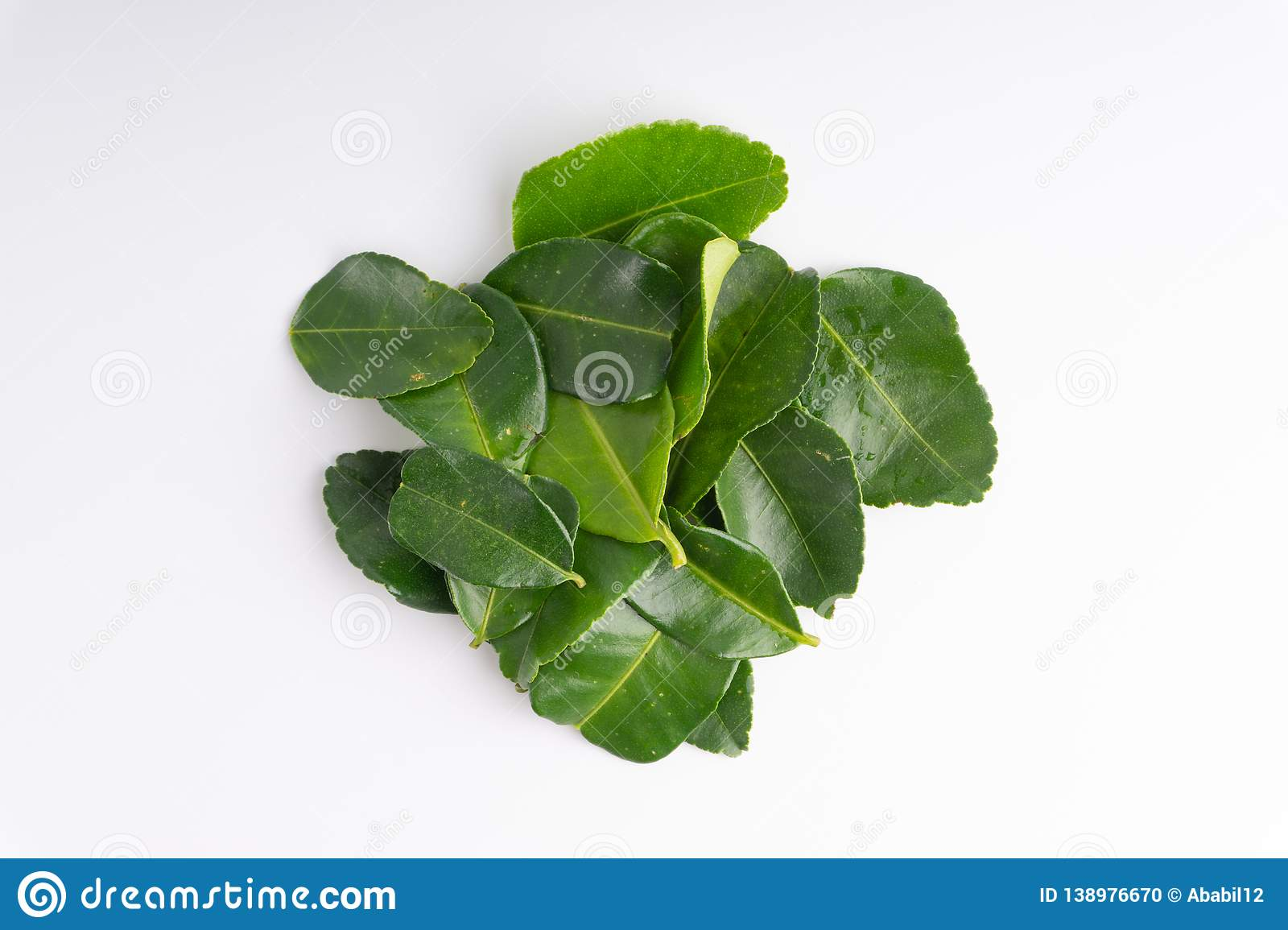 Kaffir lime leaf isolated on white background. Kaffir lime leaf Daun limau purut isolated on white background stock photo