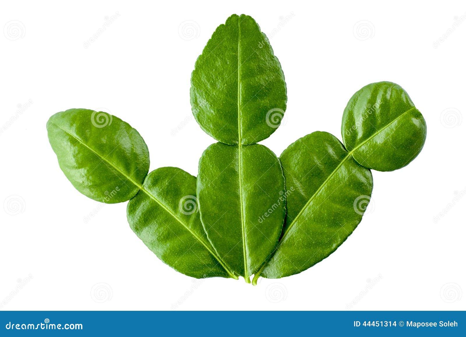 Lime Leaf Thai Food