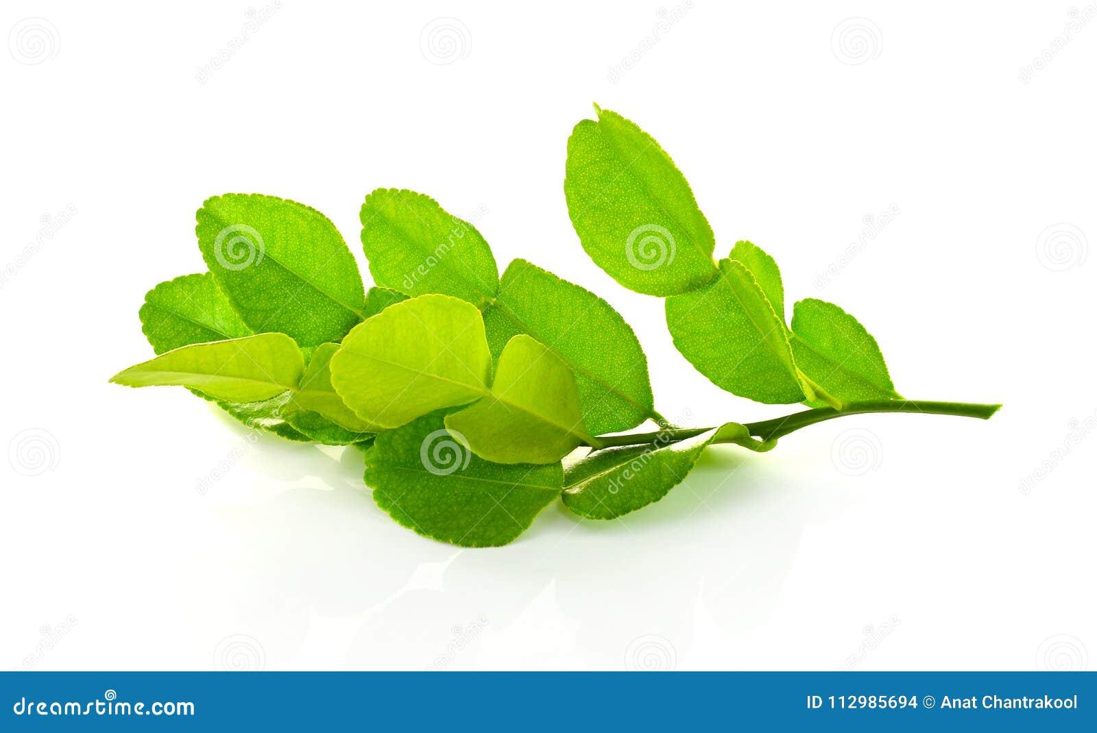 Kaffir lime leaves.