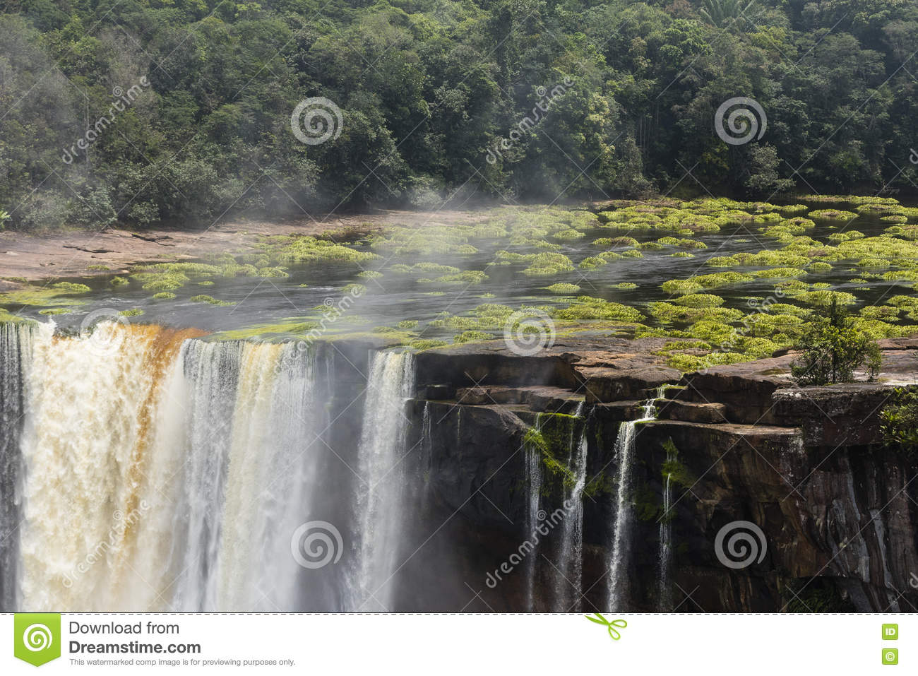 Kaieteur waterfall and plants in the water
