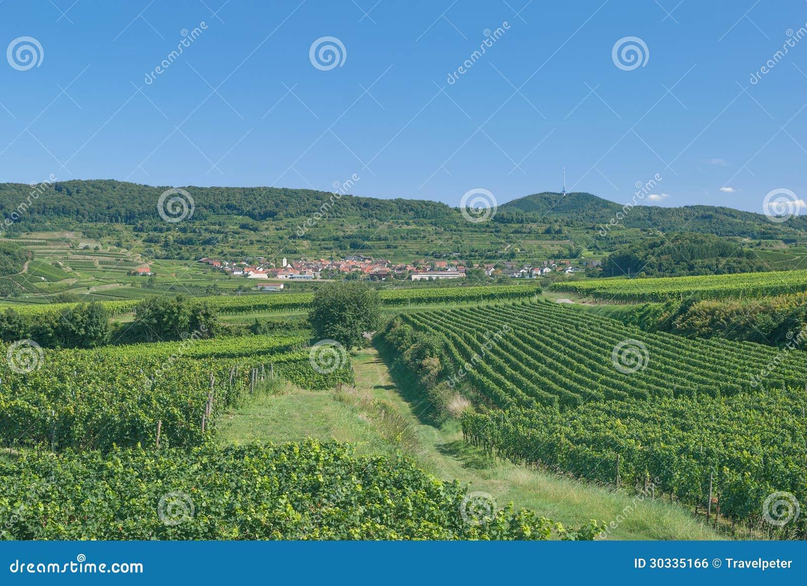 Forest Black Photo Stock Wine Kaiserstuhl Region Germany 0wP8knOX