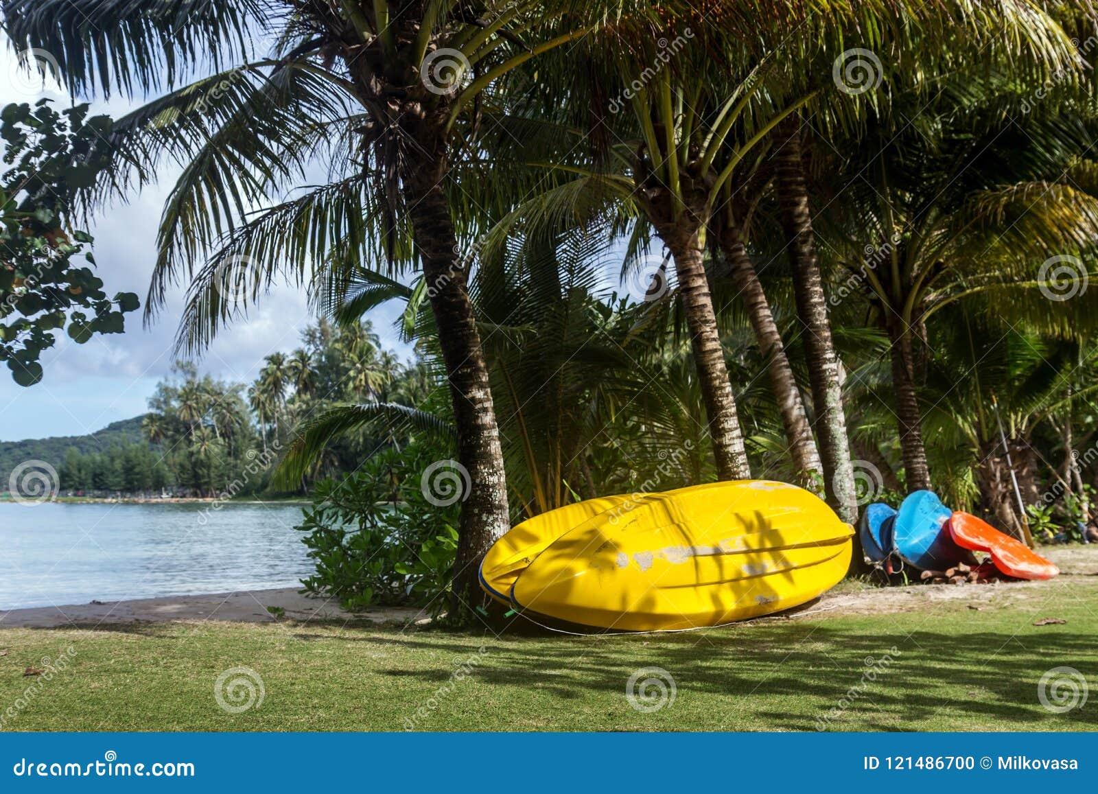 Kajak onder kokospalmen