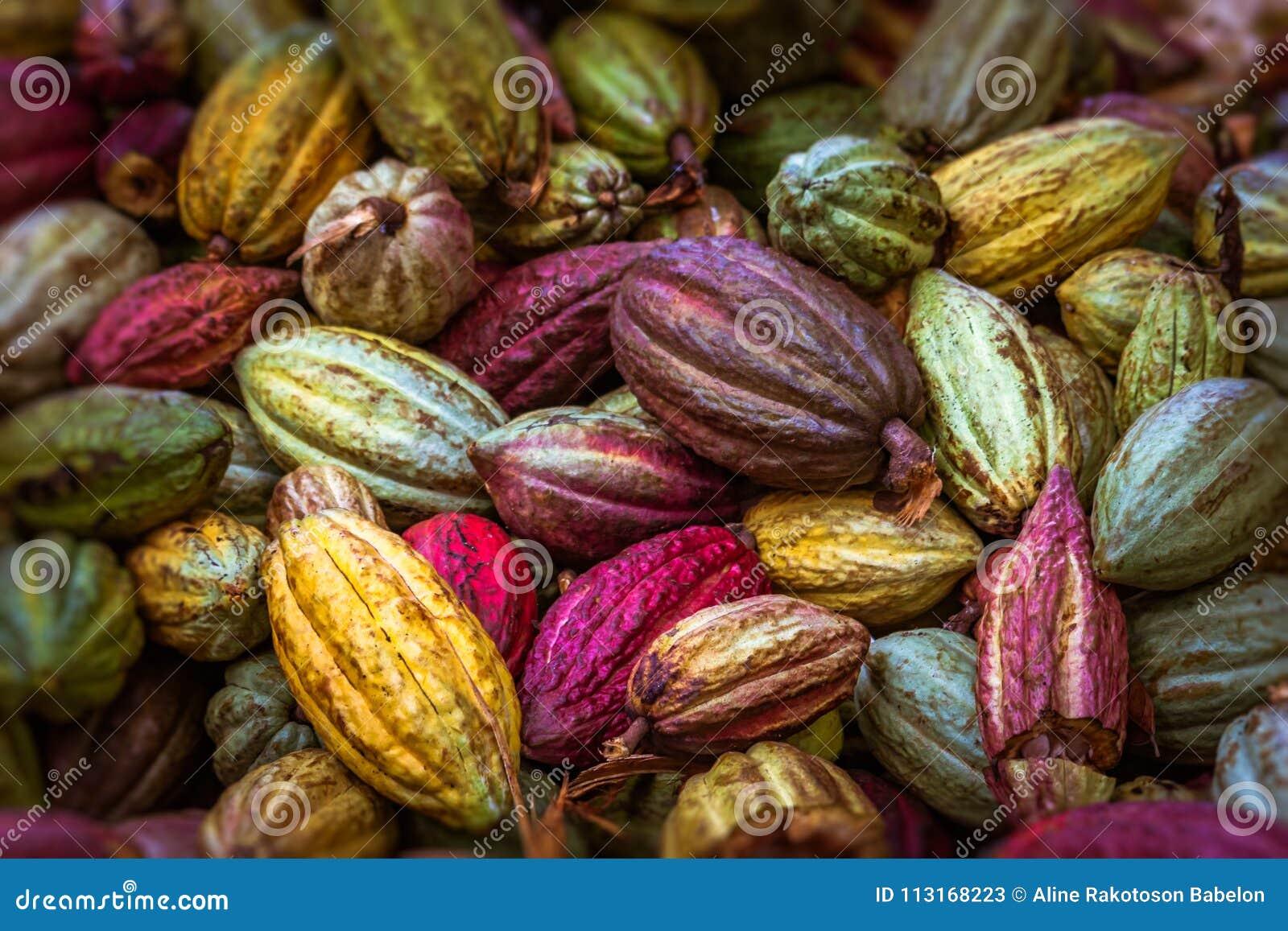 Kakaohülsen