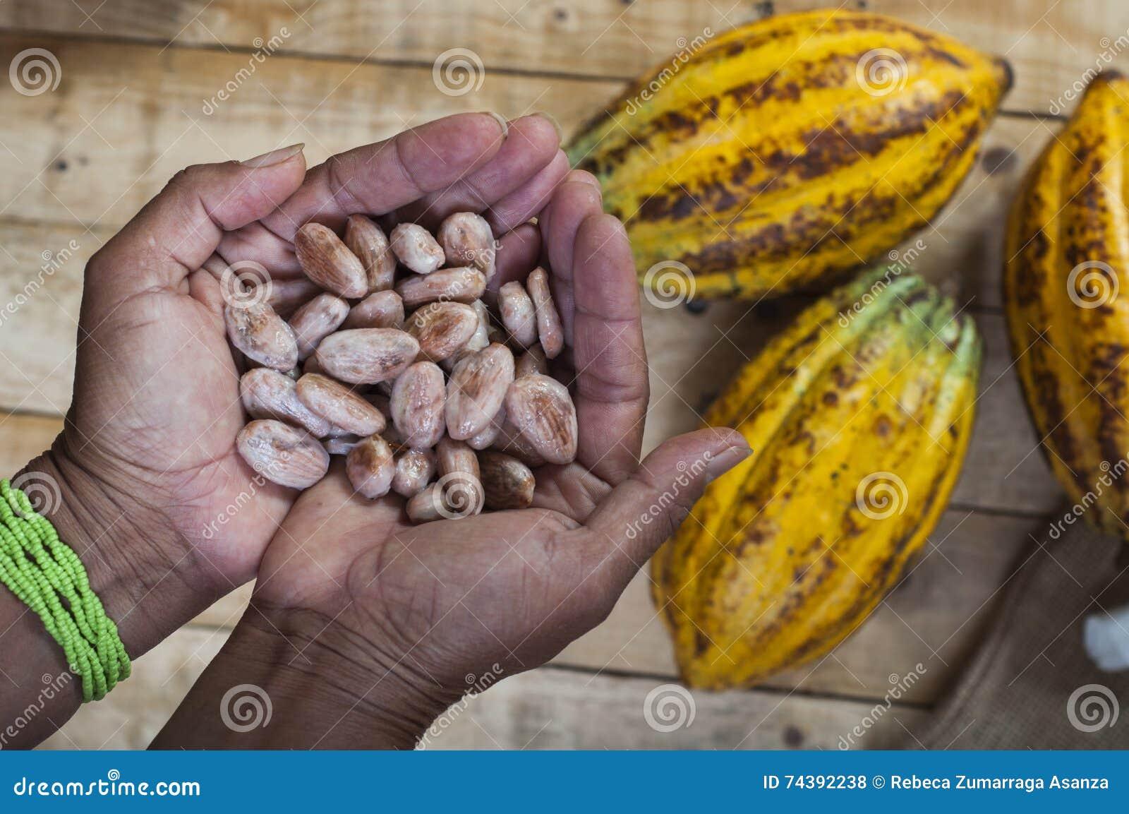 Kakaowy rolnik