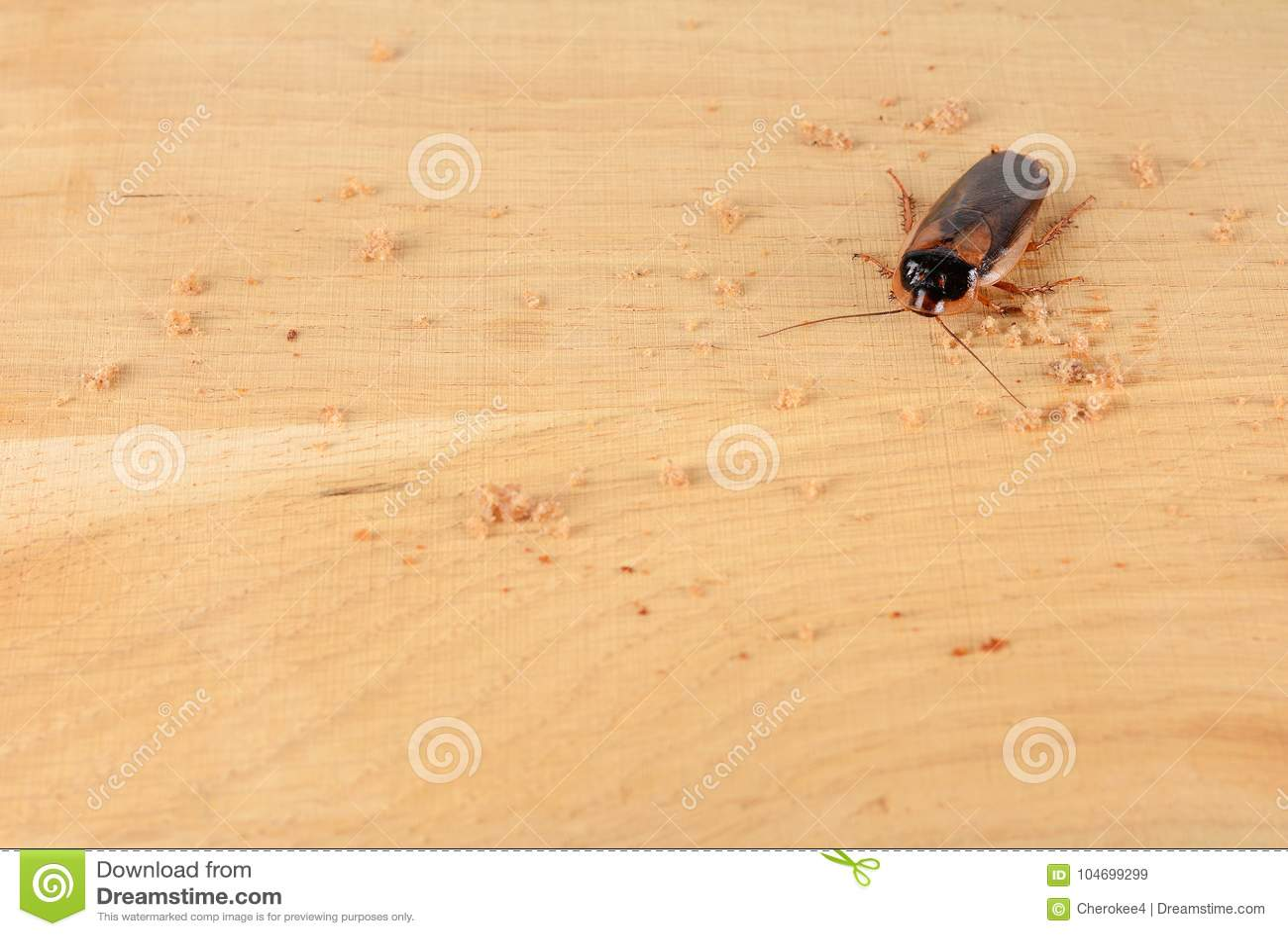 Kakkerlak in de keuken Het probleem is in het huis wegens de kakkerlakken