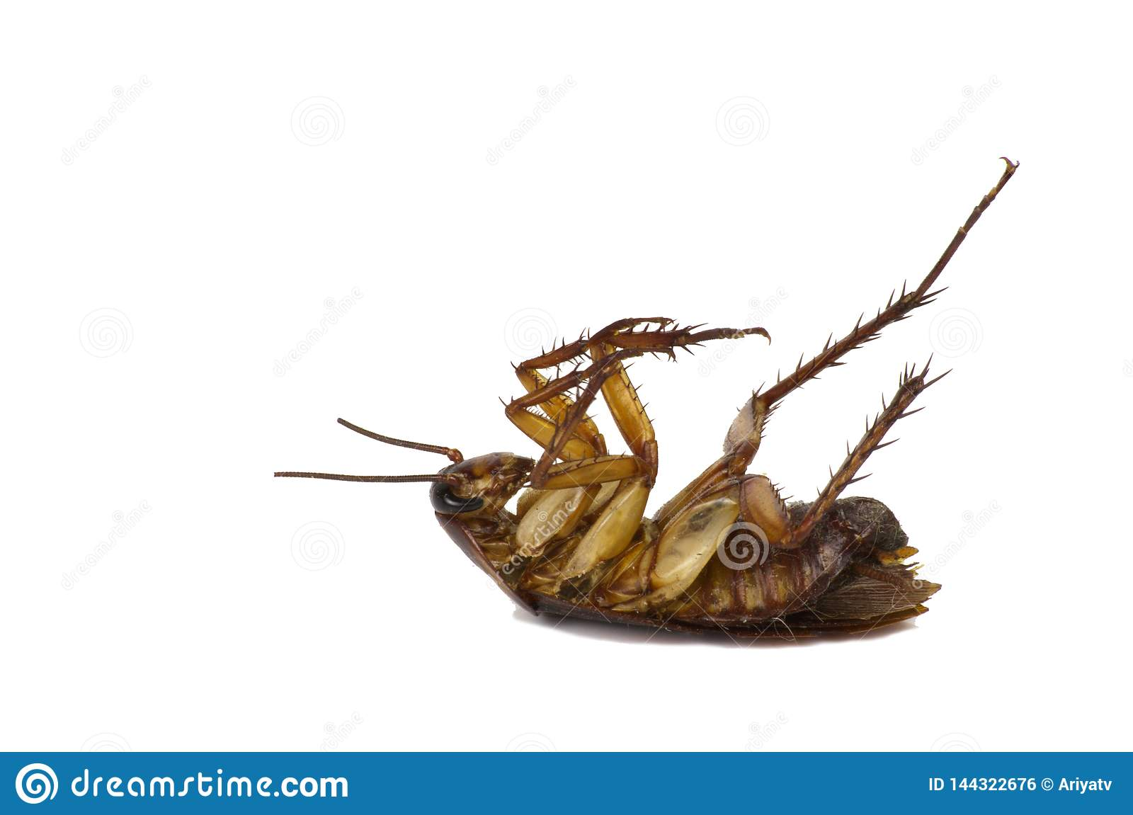 Kakkerlakken op een witte achtergrond met het cipping van weg