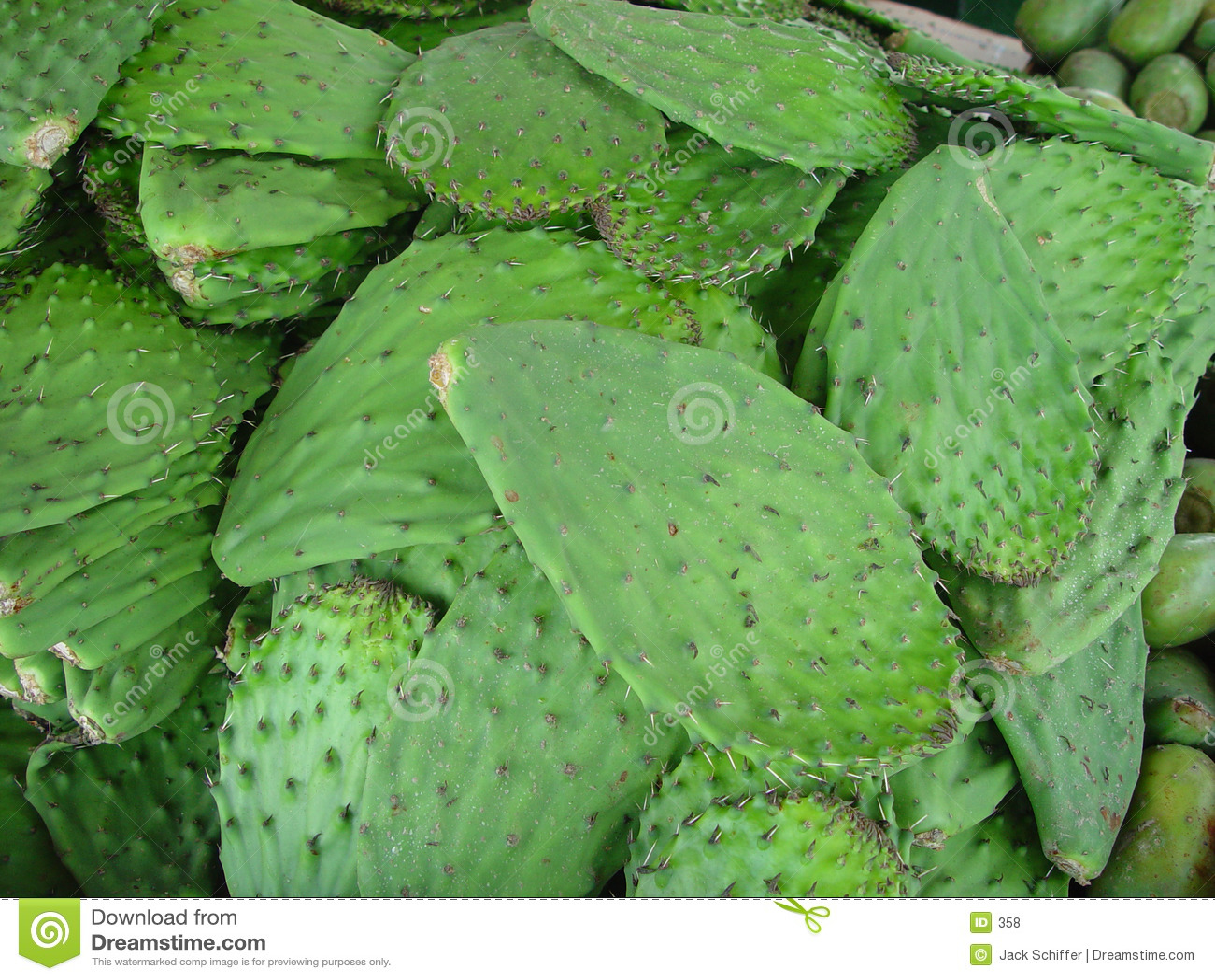 Kaktus-Blätter
