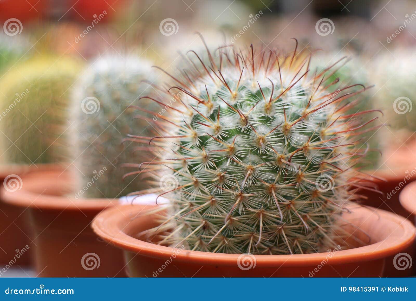 Kaktus in den Potenziometern