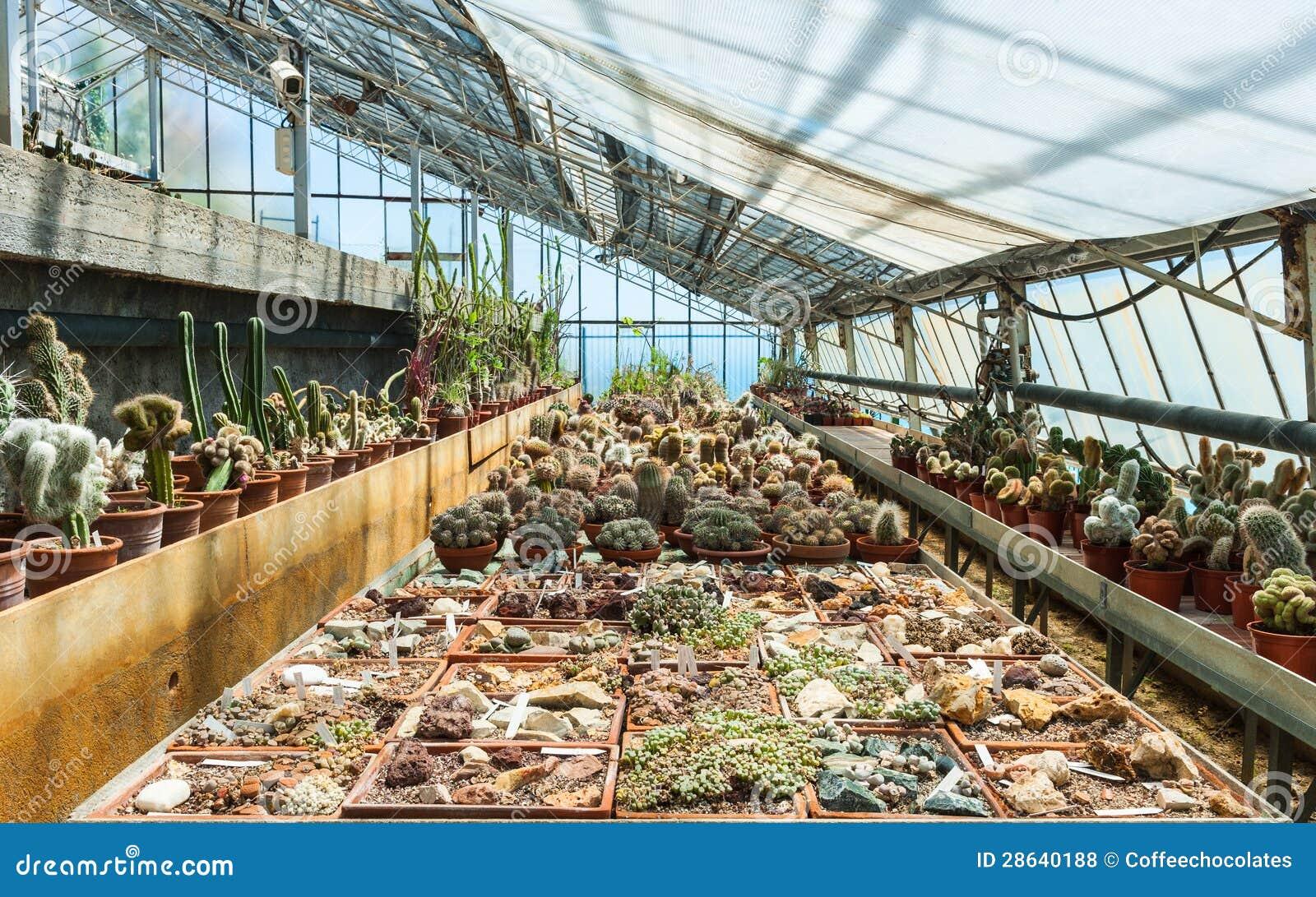 exotiska växter i växthus