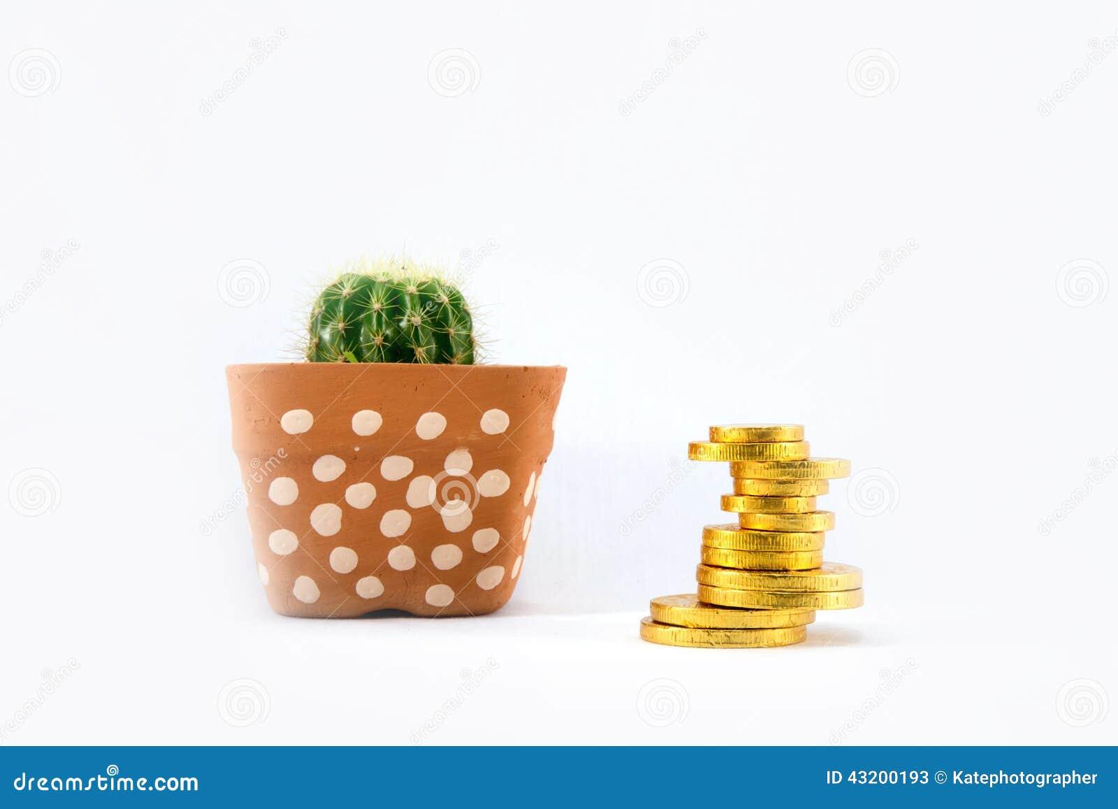 Download Kaktus I Keramisk Kruka Och Guld- Mynt Fotografering för Bildbyråer - Bild av väx, torrt: 43200193