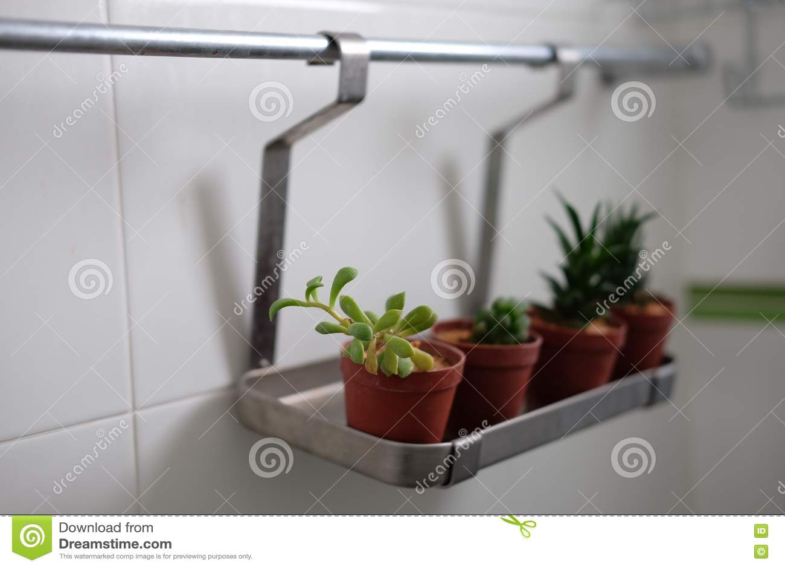 Kaktus im Badezimmer stockbild. Bild von dekoration, raum   20