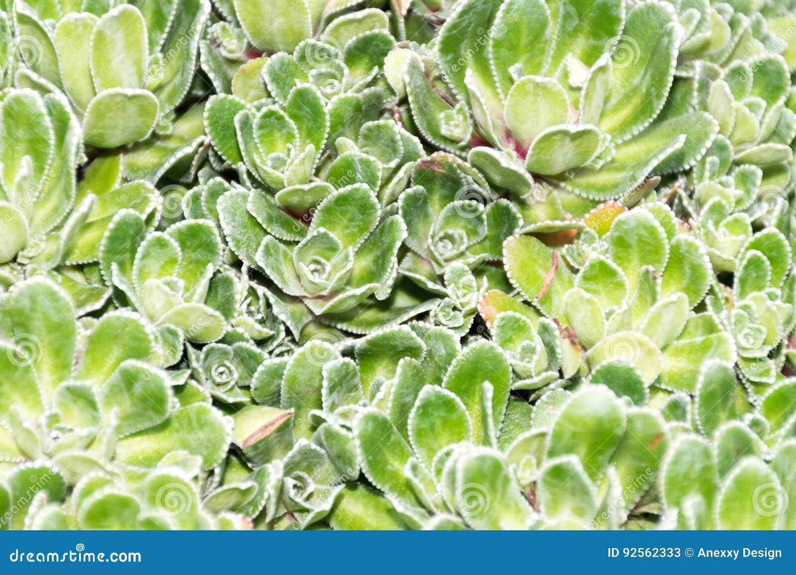 Kaktus nah oben im Garten