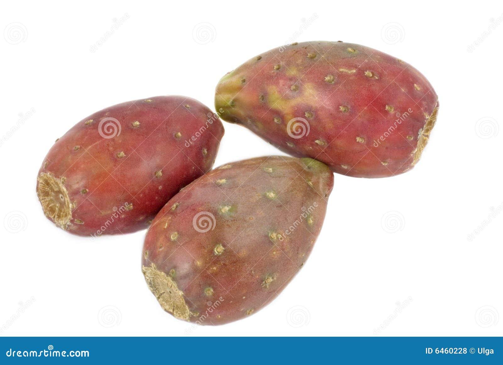 Kaktus odosobnione gruszki