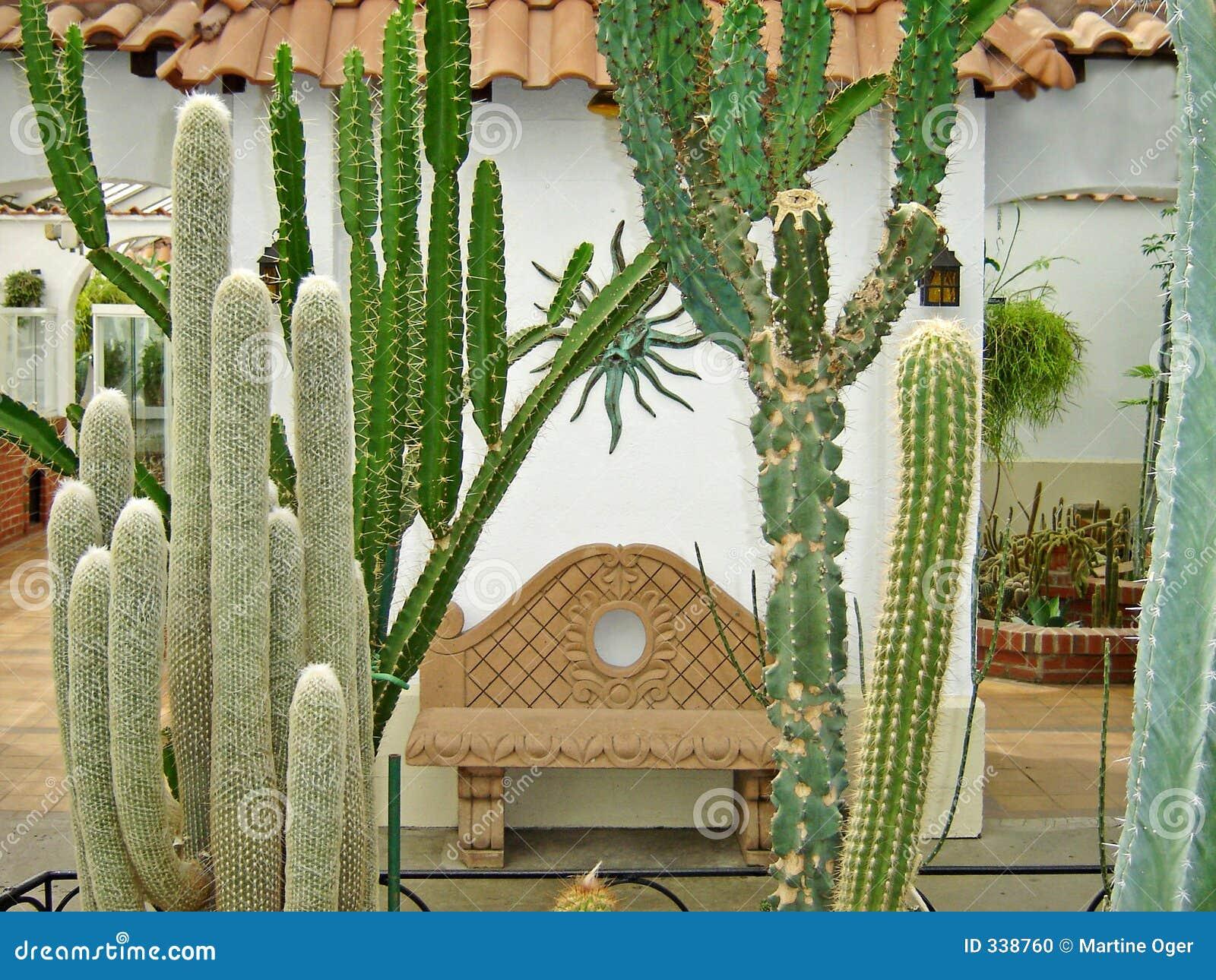 Kaktus ogród