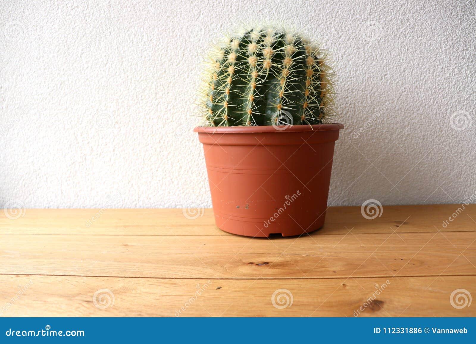Kaktus på en trätabell