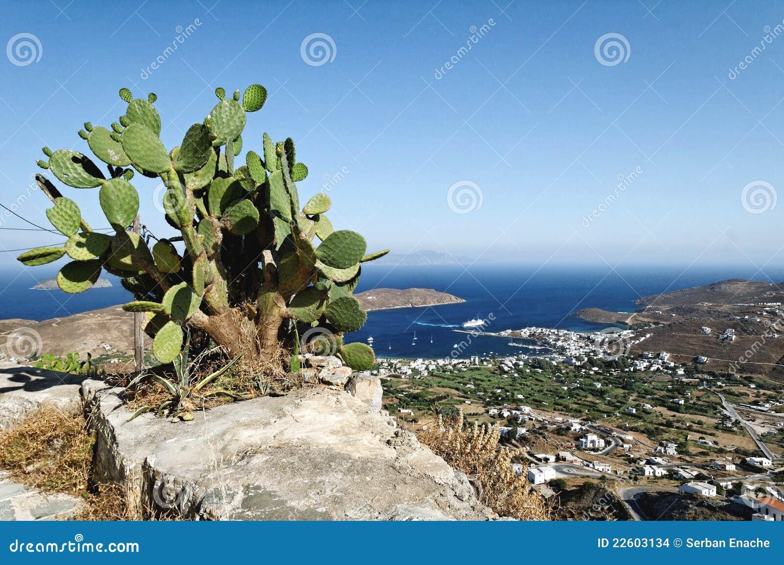 Kaktus på rock