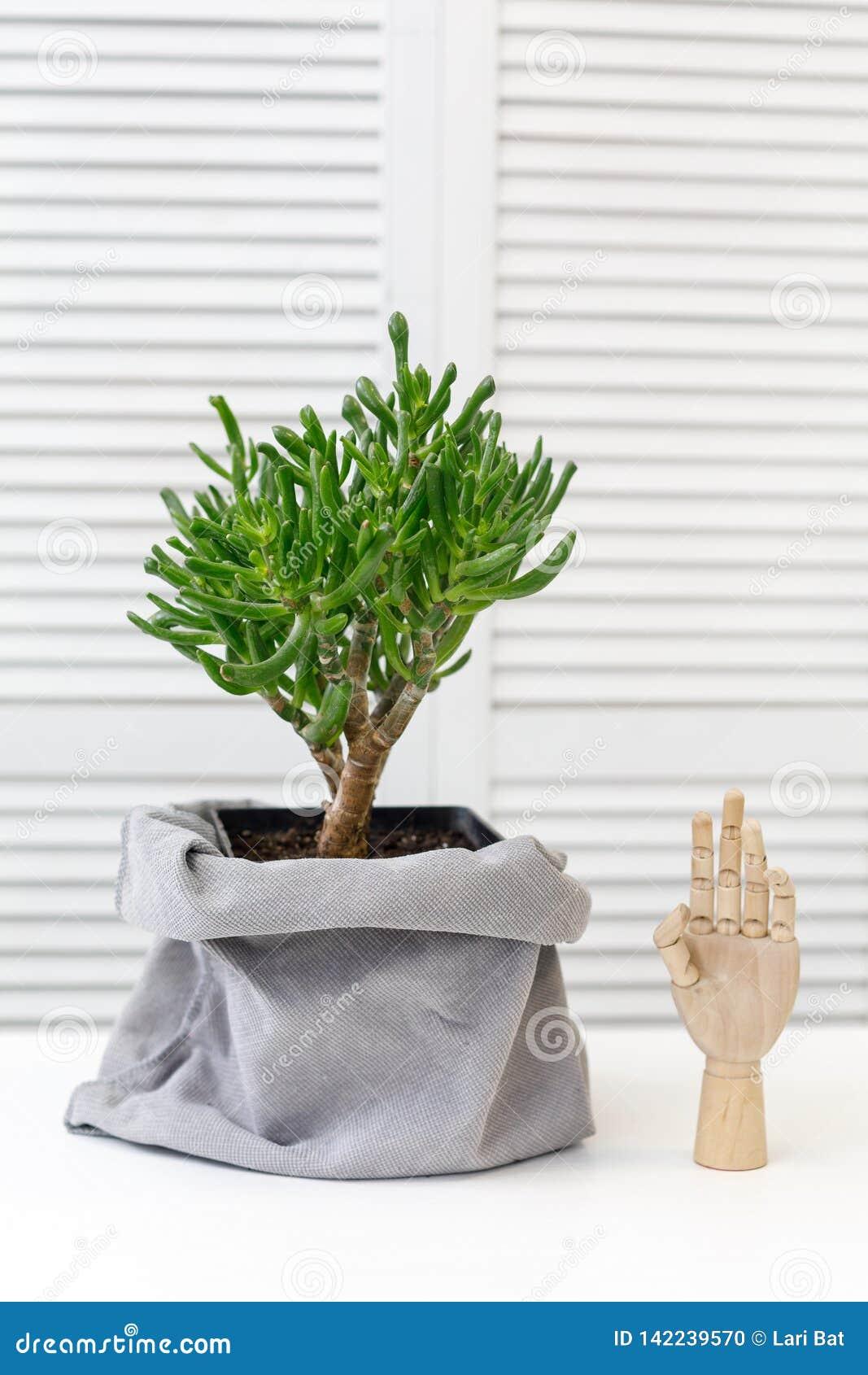 Kaktus und dekorative hölzerne Hand im Innenraum