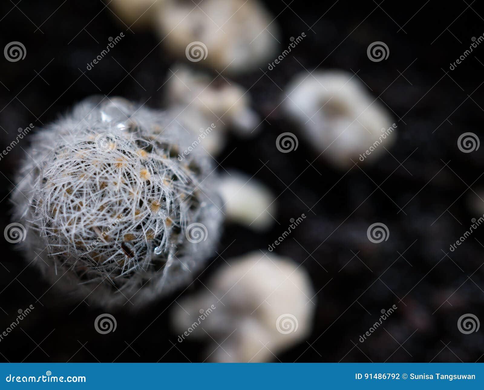 Kaktus und Dornen