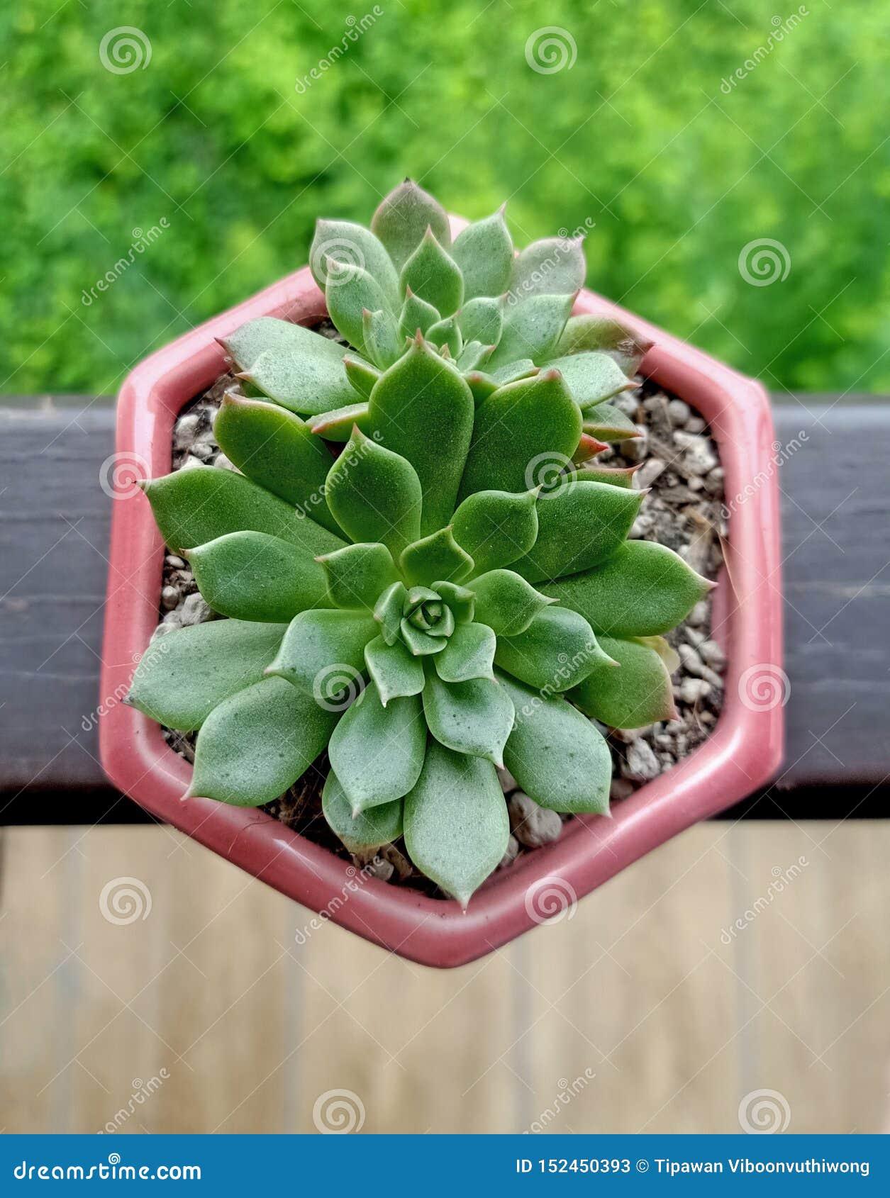 Kaktus von Natur aus