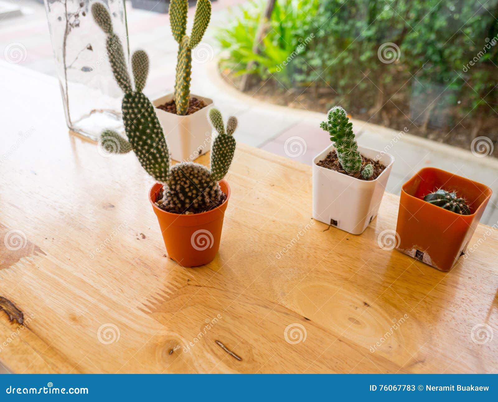Kaktuspflanzen Auf Dem Tisch Abbildung Der Roten Lilie Stockbild ...
