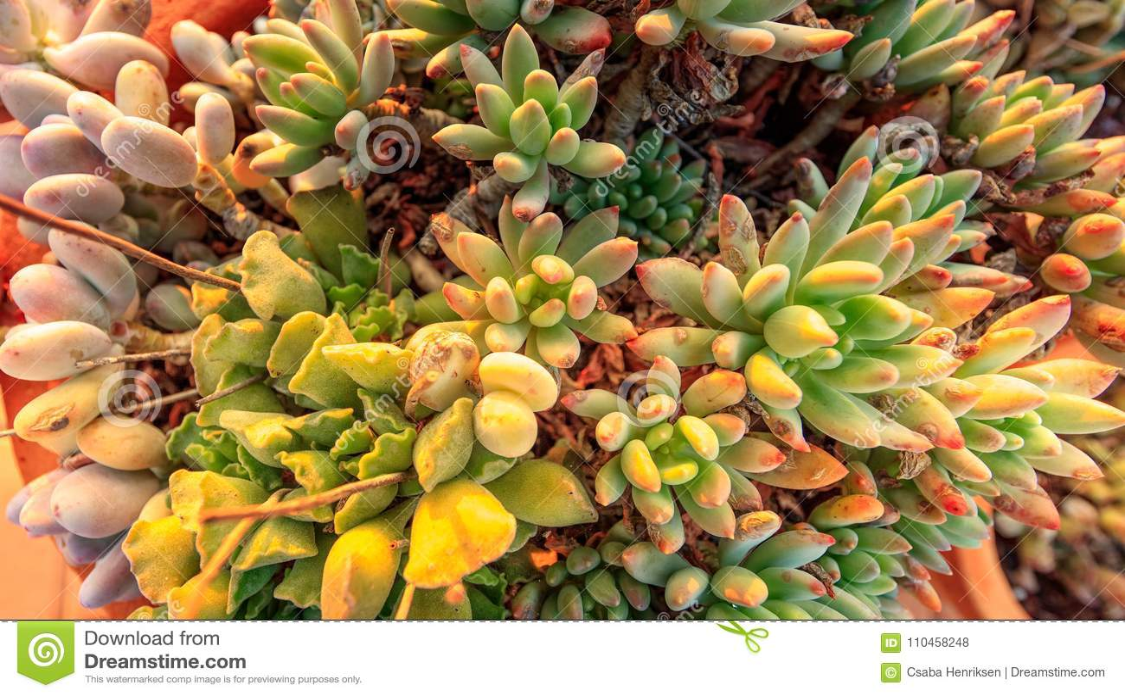 Kaktusrabatt