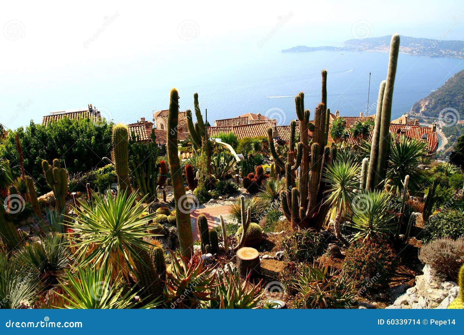 Kaktusträdgård i den Eze byn