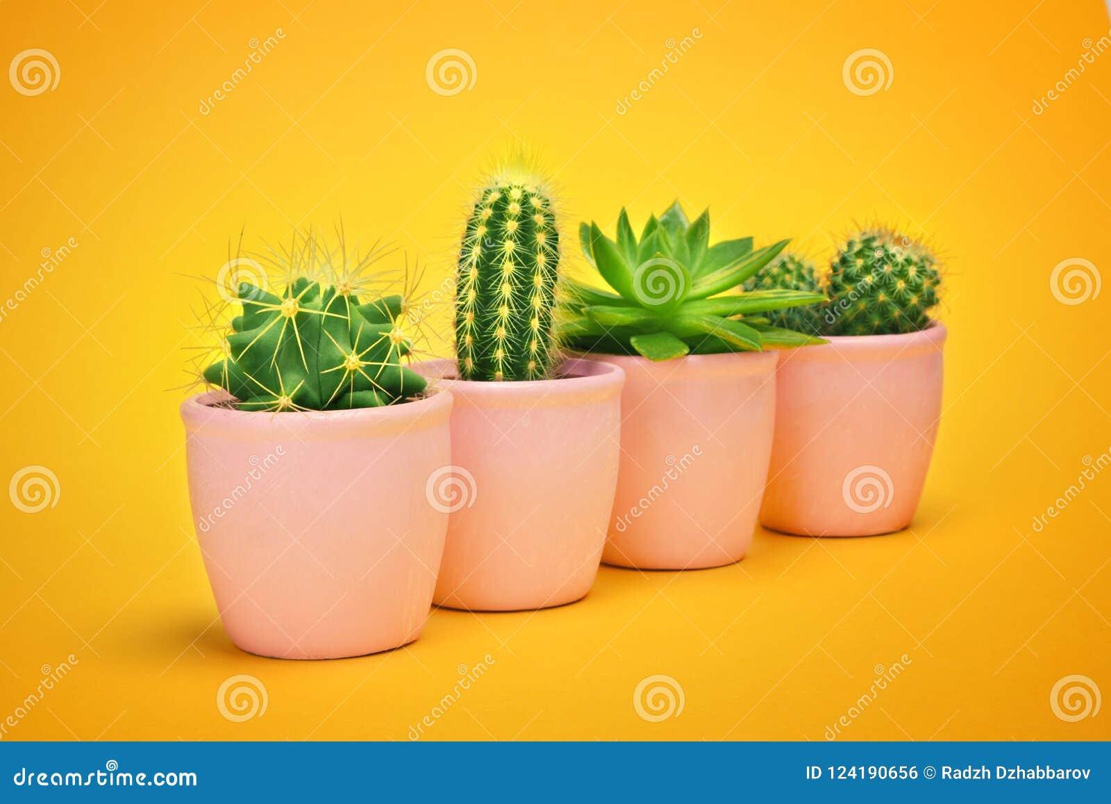 Kaktusuppsättning i keramisk krukamodedesign För sommarstilleben för kakturs minsta begrepp Grönt lynne på pastellfärgad orange b
