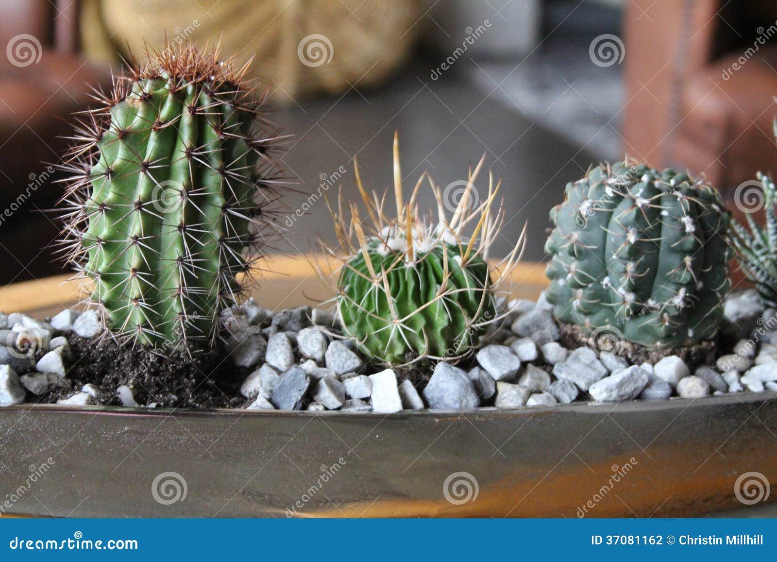 Download Kaktusy zdjęcie stock. Obraz złożonej z farm, mały, kaktus - 37081162