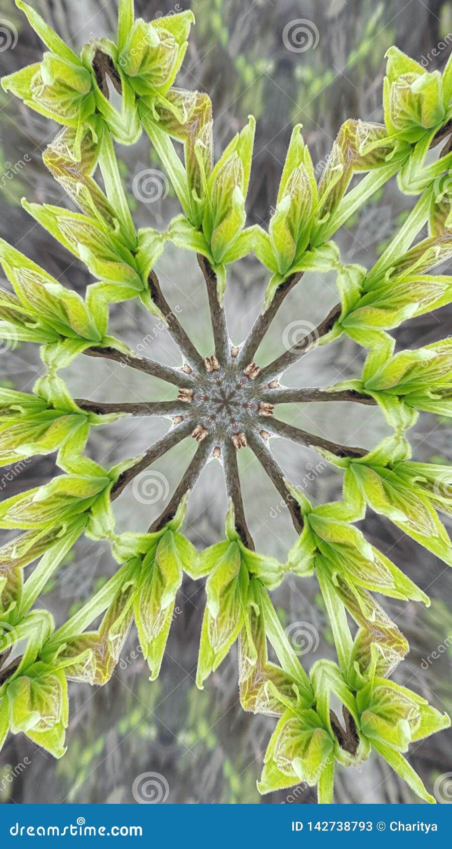 Kaleidoscope done in green